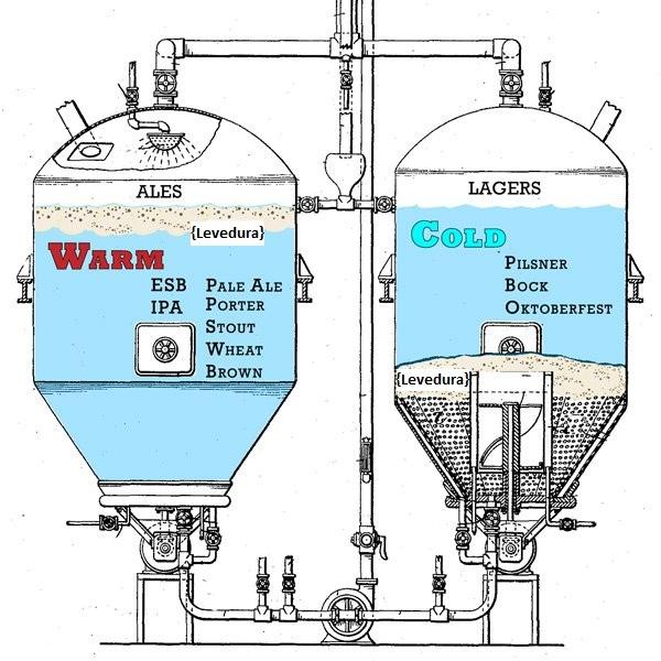 Podemos ver na ilustração o que diferencia as cervejas Ale e Lager, a sua fermentação